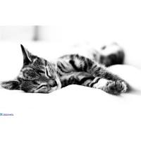 Домашние животные повышают качество сна.