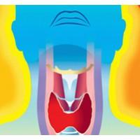 Как щитовидка влияет на женское здоровье.