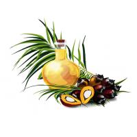 В чем риск употребления пальмового масла